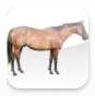 Animal Fun app